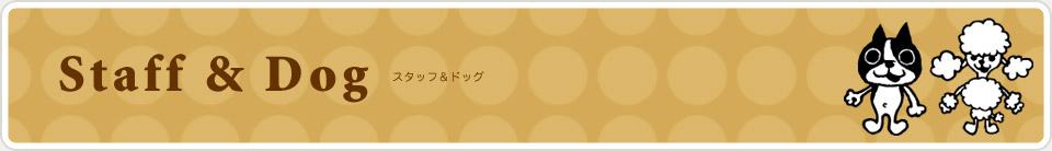 Staff & Dog :スタッフ&看板犬紹介